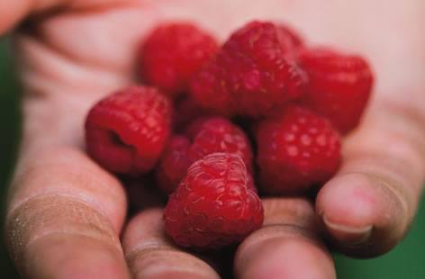 British raspberries